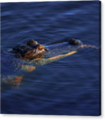 Gator And Snake Canvas Print by Tom Claud
