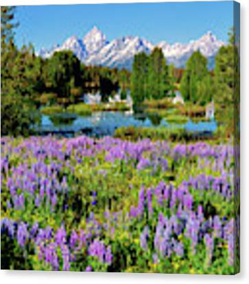 Grand Teton Lovely Lupines Canvas Print by Greg Norrell