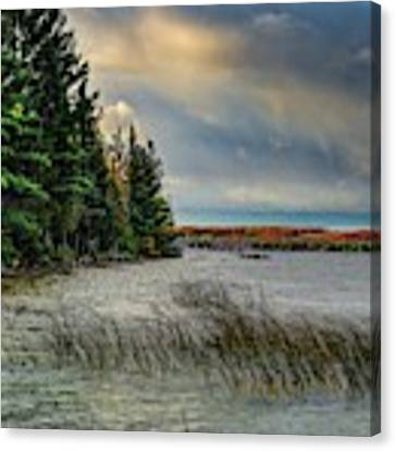 Grasses And The Fall Color Dsc_0669 Canvas Print by Michael Thomas