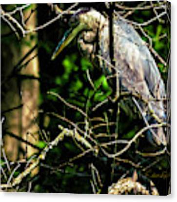 Great Blue Heron In The Tree Canvas Print by Edward Peterson