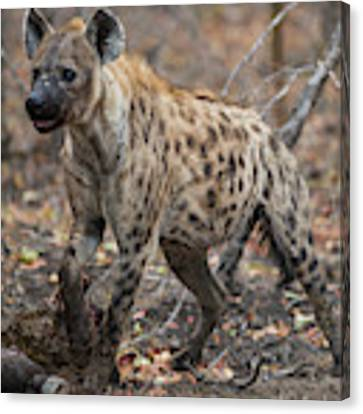 H2 Canvas Print by Joshua Able's Wildlife