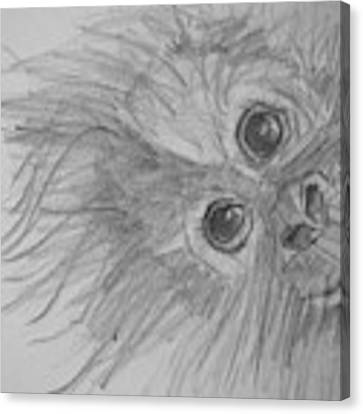 How's It Hangin'? Sketch Canvas Print by Jani Freimann