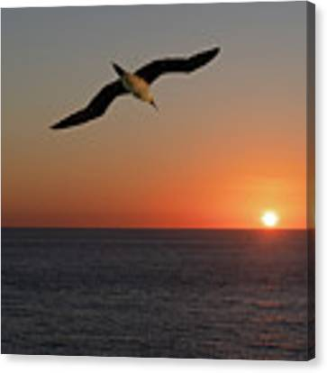Into The Setting Sun Canvas Print by William Dickman