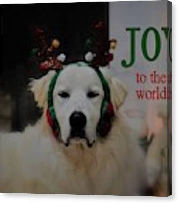 Joy To The World Pyrenees Canvas Print by Patti Whitten