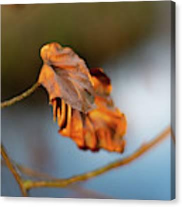 Last Leaves Of Autumn Canvas Print by Scott Lyons