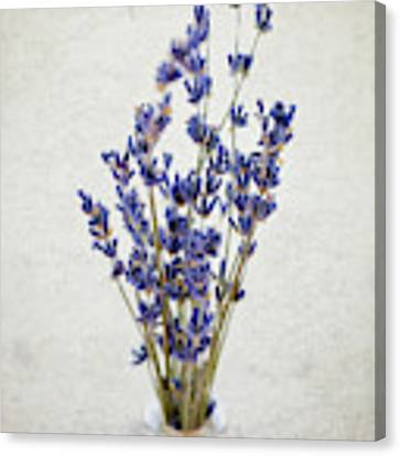Lavender Canvas Print by Nicole Young
