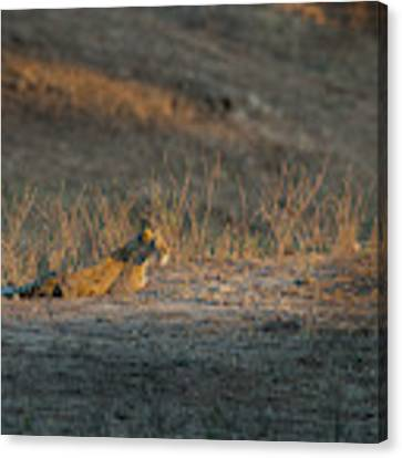 Lc12 Canvas Print by Joshua Able's Wildlife
