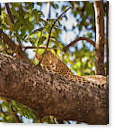 Lc13 Canvas Print by Joshua Able's Wildlife