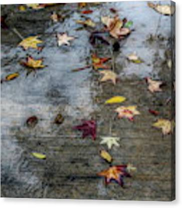 Leaves In The Rain Canvas Print by Alison Frank