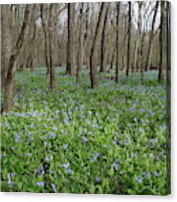 Merwin Lowland Bluebells II Canvas Print by Dylan Punke