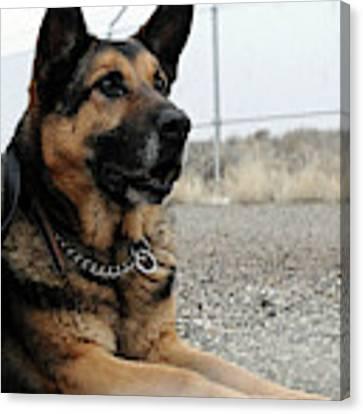Military Dog Rexo Canvas Print by Robert G Kernodle