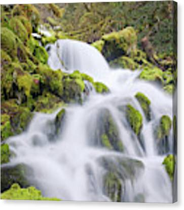 Mossy Falls Canvas Print by Nicole Young