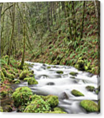 Mossy Stream Canvas Print by Nicole Young