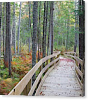 Mud Pond Trail - Pondicherry Wildlife Refuge, New Hampshire Canvas Print by Erin Paul Donovan
