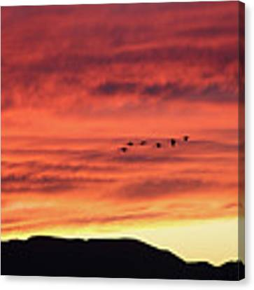 Mule Mountains Sunset Canvas Print by Jean Clark