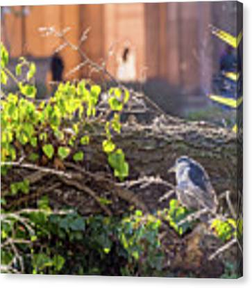 Night Heron At The Palace Canvas Print by Kate Brown