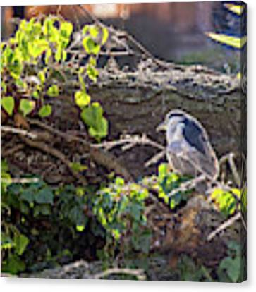 Night Heron At The Palace Revisited Canvas Print by Kate Brown