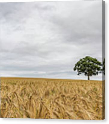 Oak And Barley Canvas Print by Nick Bywater