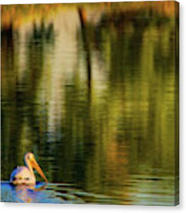 Pelican In Sunlight Canvas Print by John De Bord