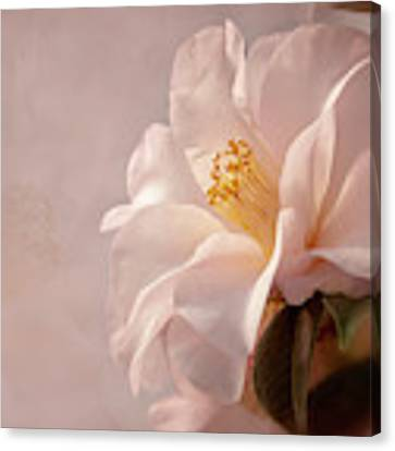 Pink Japanese Camellia Canvas Print by Mary Jo Allen