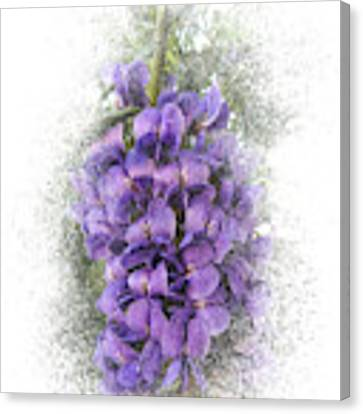 Purple Texas Mountain Laurel Flower Cluster Canvas Print by Patti Deters