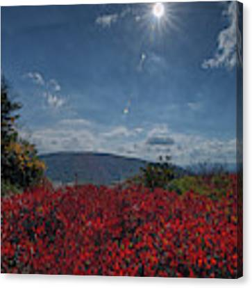 Red Leaves In The Sun Canvas Print by Dan Friend