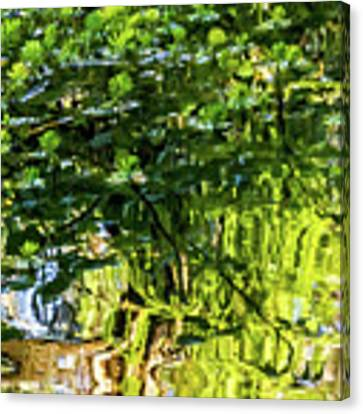 Reflections In Green Canvas Print by Kate Brown