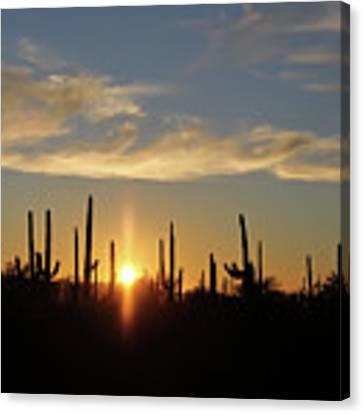 Saguaro Sunset Canvas Print by Jean Clark