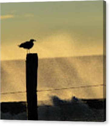 Seagull Silhouette On A Piling Canvas Print by William Dickman