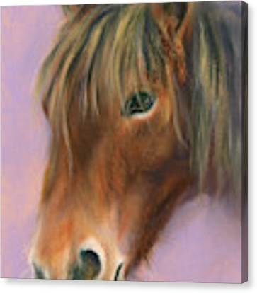 Shaggy Brown Pony Canvas Print by MM Anderson