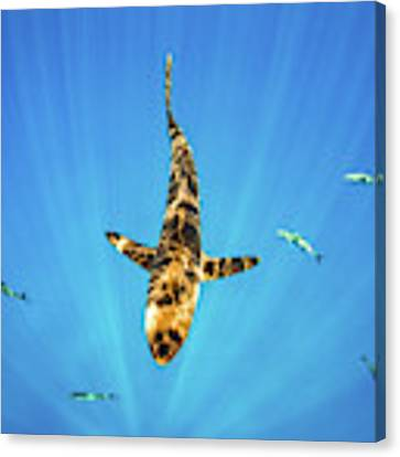 Silky Shark Canvas Print by Nicole Young