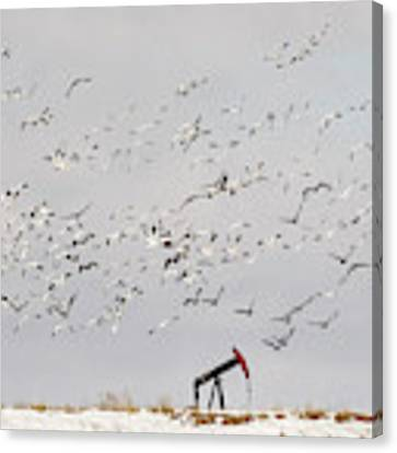 Snow Geese Over Oil Pump 02 Canvas Print by Rob Graham
