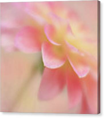 Soft Touch Canvas Print by Mary Jo Allen