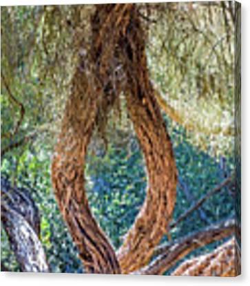 Strange Tree Canvas Print by Kate Brown
