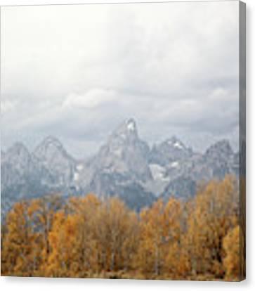 Teton Foliage Canvas Print by Jean Clark