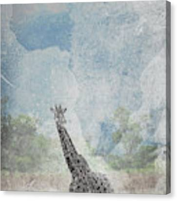 The African Giraffe Canvas Print by Mary Lee Dereske
