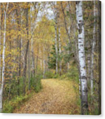 The Golden Path Canvas Print by Susan Rissi Tregoning