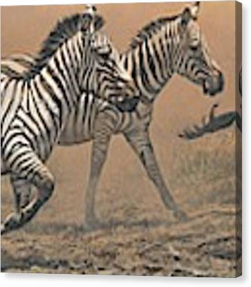 The Race - Zebras Canvas Print by Alan M Hunt
