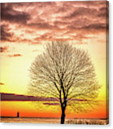 The Tree Canvas Print by Jeff Sinon
