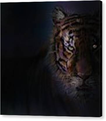 Tiger In The Dark Canvas Print by Darren Cannell