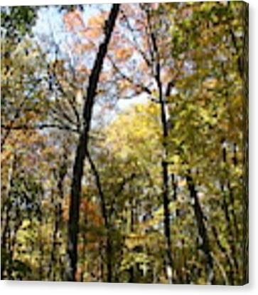 Transitioning Merwin Canopy Canvas Print by Dylan Punke
