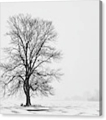 Tree In Blizzard I Canvas Print by Denise Bush