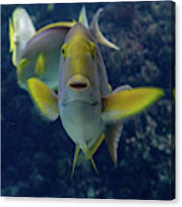 Tropical Fish Poses. Canvas Print by Anjo Ten Kate