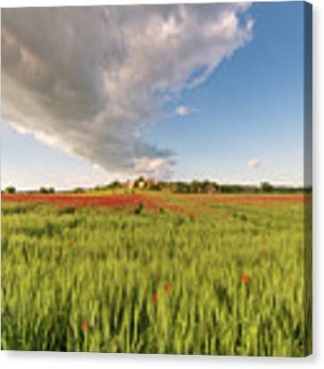 Tuscany Wheat Field Dotted With Red Poppies Canvas Print by Mirko Chessari