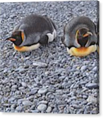 Two King Penguins By Alan M Hunt Canvas Print by Alan M Hunt