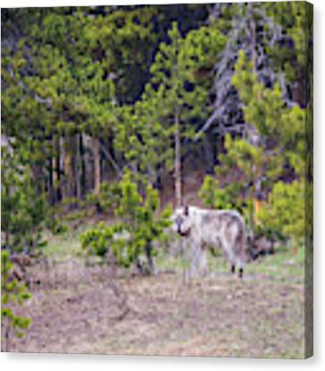 W755 Canvas Print by Joshua Able's Wildlife