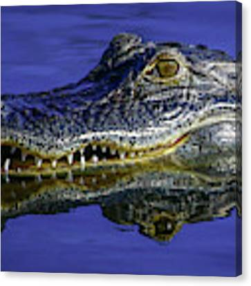 Wetlands Gator Close-up Canvas Print by Tom Claud