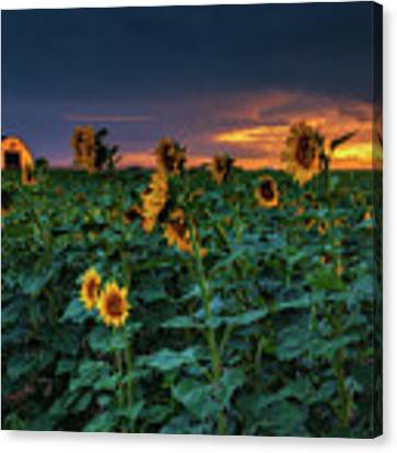 Whispers Of Summer Canvas Print by John De Bord