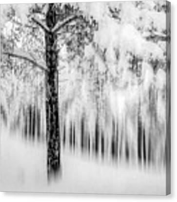 Winter Canvas Print by Okan YILMAZ