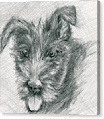 Wolfhound Puppy Sketch Canvas Print by MM Anderson